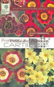 Primroses And Auriculas / Primule