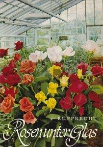 Rosen unter Glas / Trandafiri in sera