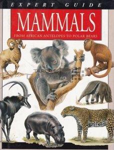 Mammals / Mamifere