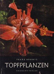 Topfpflanzen / Plante in ghiveci