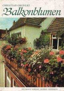 Balkonblumen / Flori de balcon